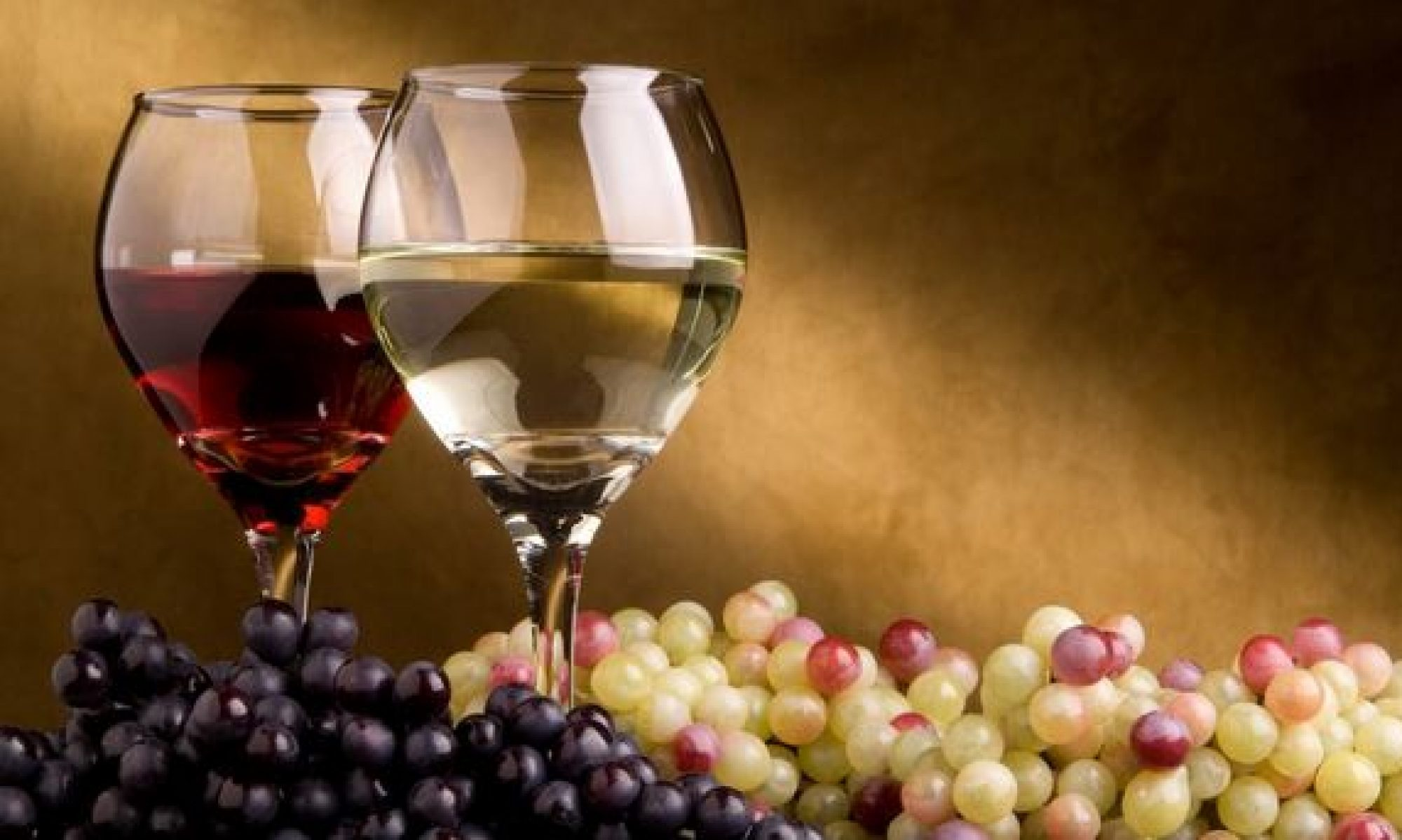 Wine Tours Cape